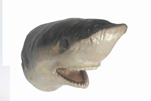 Κεφάλι Καρχαρία