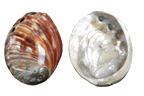 Κοχύλια Abalone Κοκκινο Γυαλισμενο