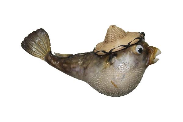Ψάρι Παπαγάλος με καπέλο