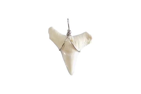 """Δόντι Καρχαρία Ταύρου κάτω από 1"""""""