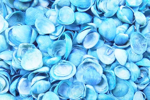 Κοχυλια Cay-Cay Γαλάζιο