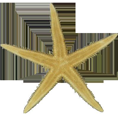 Αστερίας Flat Φυσικός