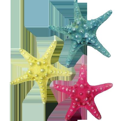 Αστερίας Philippine Χρωματιστός