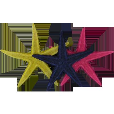 Αστερίας Flat Χρωματιστός